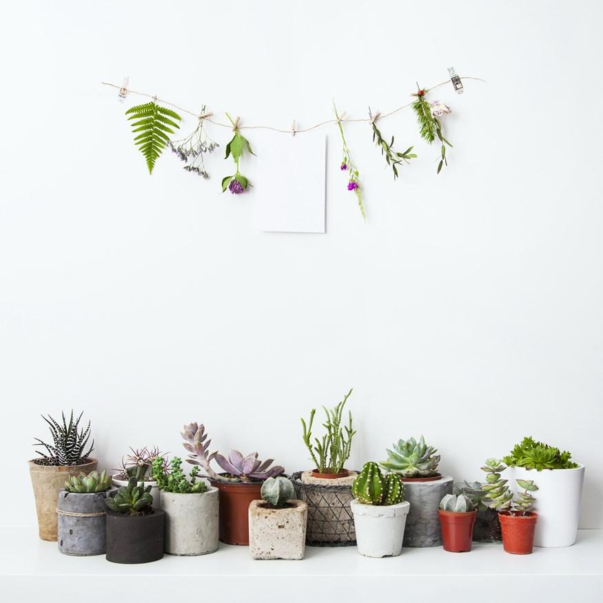 """Super ιδέα! Αυτές τις τροφές μας, θα τις """"λάτρευαν"""" και τα φυτά μας"""