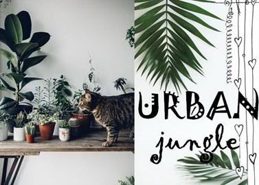 Urban Jungle: Οι πιο όμορφες καταπράσινες συνθέσεις ever