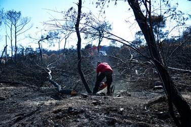 Μαρτυρία σοκ από το Μάτι: Γυναίκα προσπάθησε να αυτοκτονήσει, επειδή έχασε τους δικούς της στις πυρκαγιές
